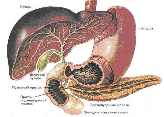 Панкреатит: симптоми і лікування