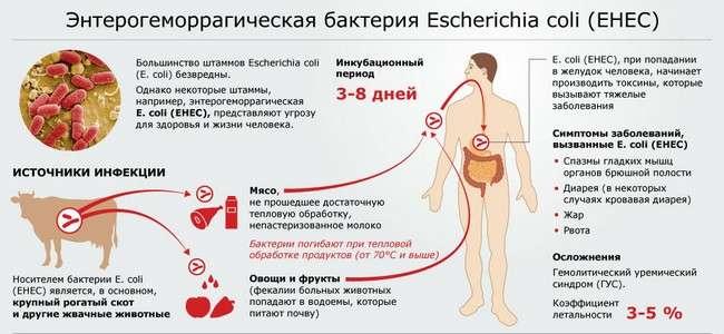 Кишкова паличка: симптоми і лікування