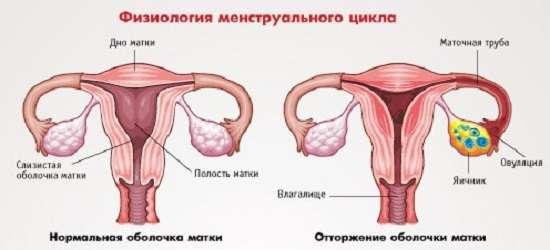 Аменорея: симптоми і лікування