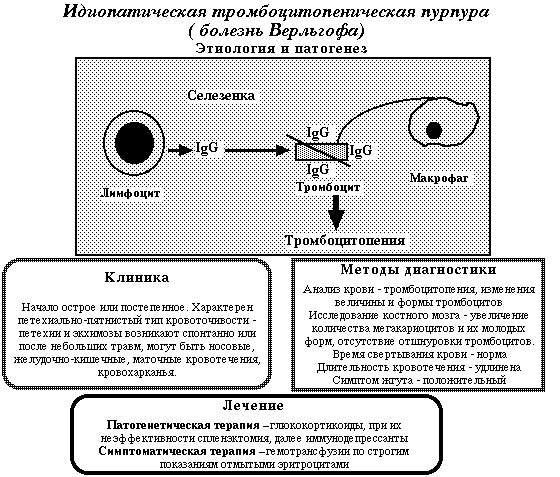 Тромбоцитопенічна Пурпура (хвороба Верльгофа): симптоми і лікування