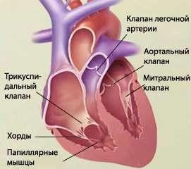 Порок серця: симптоми і лікування