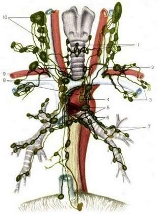 Лімфаденопатія: симптоми і лікування