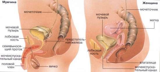 Цистит: симптоми і лікування