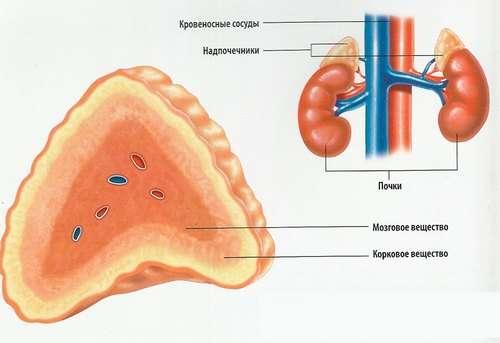 Надниркова недостатність: симптоми і лікування