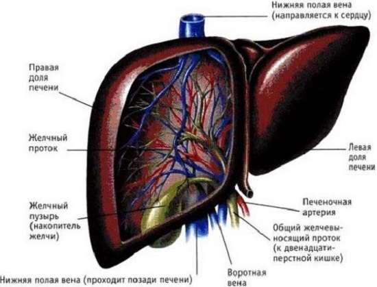 Цироз печінки: симптоми і лікування