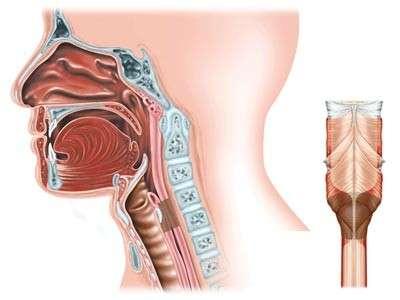 Стеноз гортані: симптоми і лікування