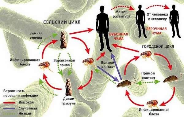 Чума: симптоми і лікування
