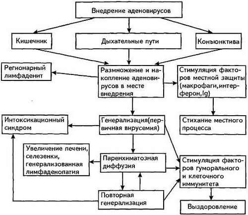 Аденовірусна інфекція: симптоми і лікування
