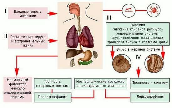 Енцефаліт: симптоми і лікування