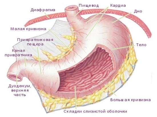 Рак шлунка: симптоми і лікування