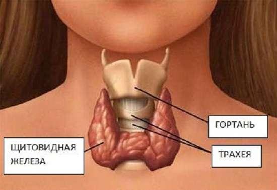 Рак щитовидної залози: симптоми і лікування