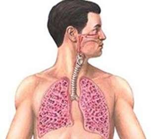 Фиброзирующий альвеоліт: симптоми і лікування