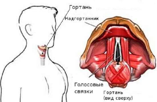 Ларингіт: симптоми і лікування