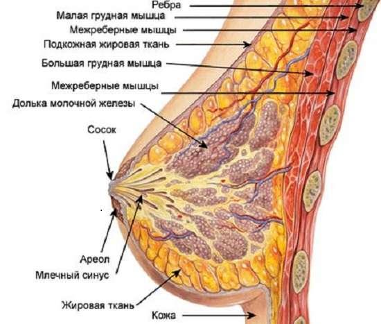 Мастопатія: симптоми і лікування