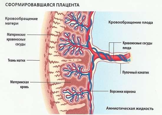 Передлежання плаценти: симптоми і лікування
