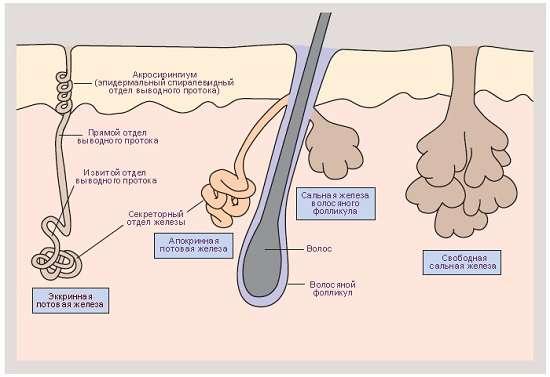 Гіпергідроз: симптоми і лікування