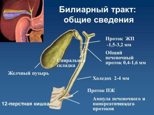 Дисфункції біліарного тракту: симптоми і лікування