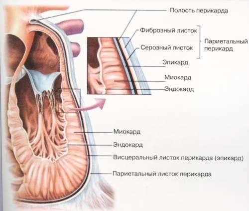 Дистрофія міокарда: симптоми і лікування