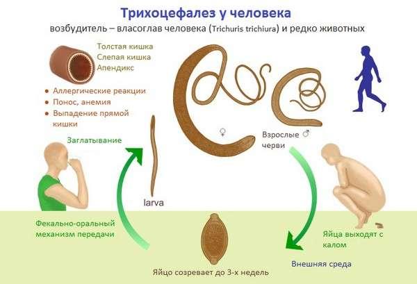 Трихоцефальоз: симптоми і лікування