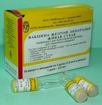 Жовта лихоманка: симптоми і лікування