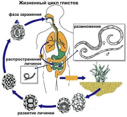 Гельмінтоз: симптоми і лікування