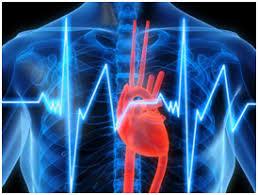 УЗД серця (ехокардіографія) – Благомед